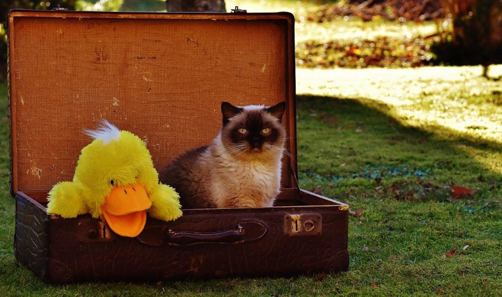 luggage, antique, cat